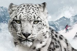DYNAFIT_Snow Leopard Day Visual (002)