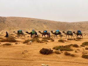 craghoppers-Kamele