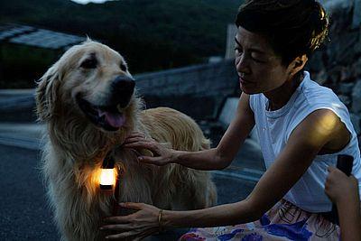 Led Lensser auch für Hunde